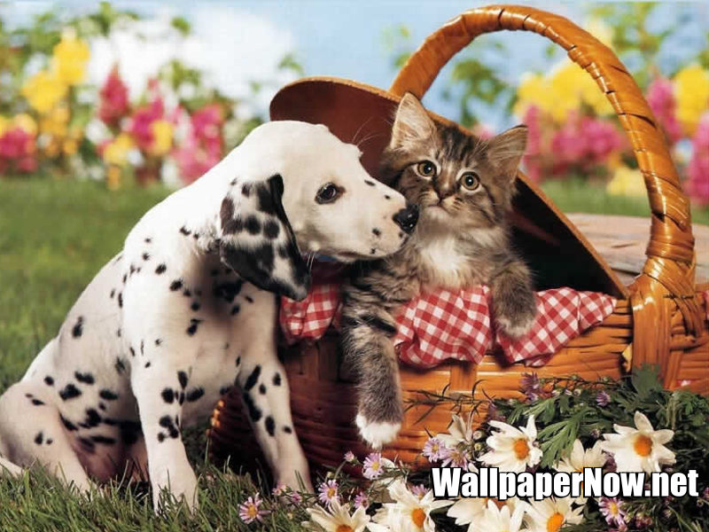 dog-and-cat-wallpaper.jpg