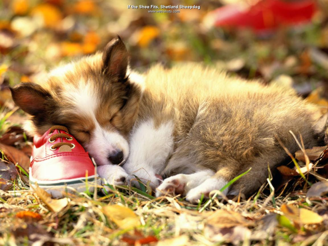 dog-with-red-shoe-wallpaper-1152x864.jpg
