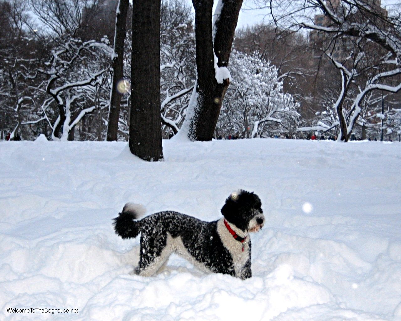 snow_dog_wallpaper.jpg