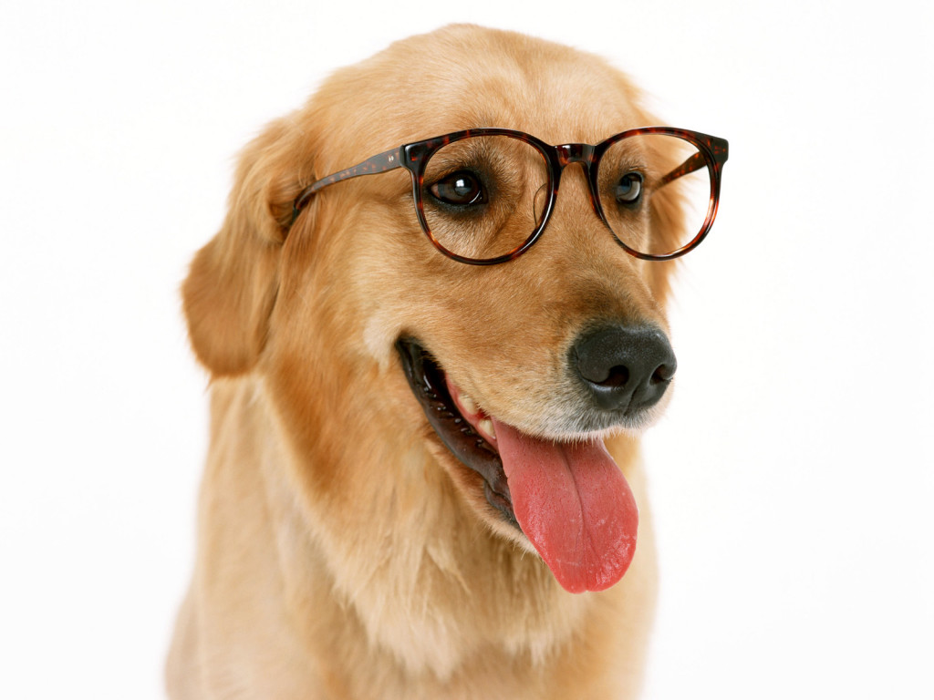 Animals_Dogs_Wearing_glasses_Dog_005508_.jpg
